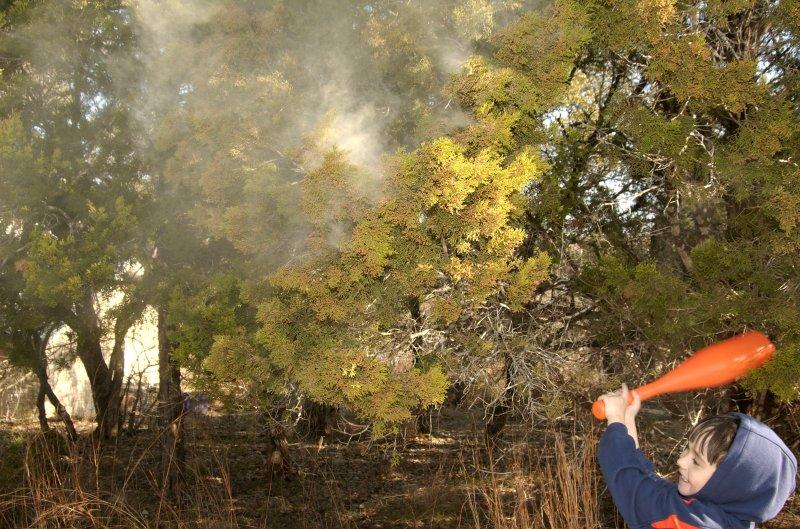 Cedar pollen explosion by digital_house