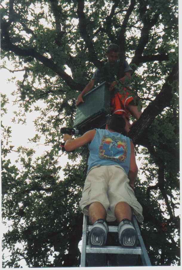 Tommy and Matt hanging bat houses 2003ish