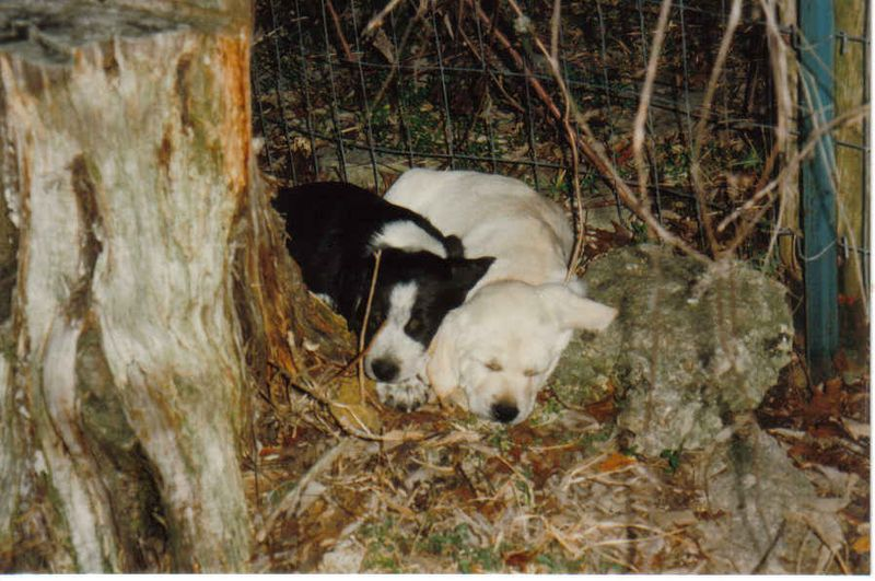 Chewy and charly baby pics 1996