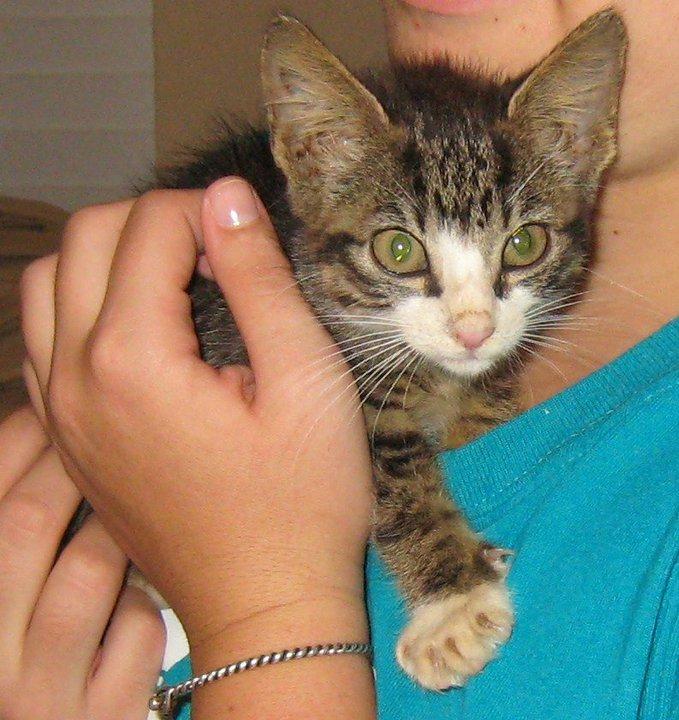 Shari's kitten