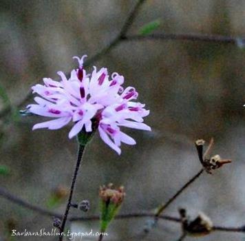 Purple flower crop med.
