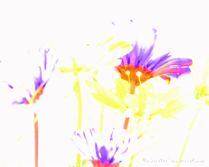 DSC_0127sign (Medium)