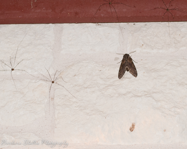 Ddll and moth may 13-13-2