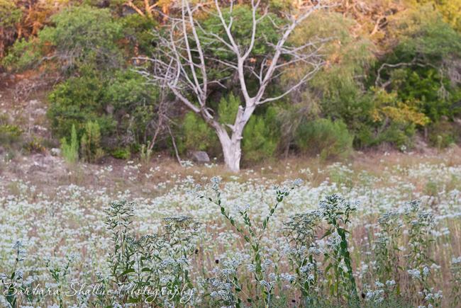 Snow-on-the-prairie august 2013-0111