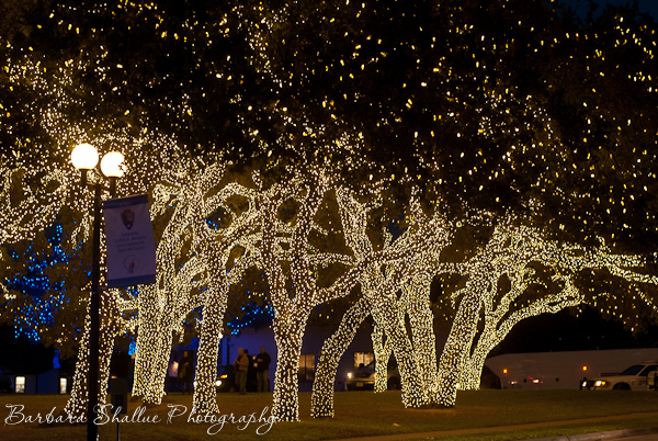 Johnson City Christmas Lights