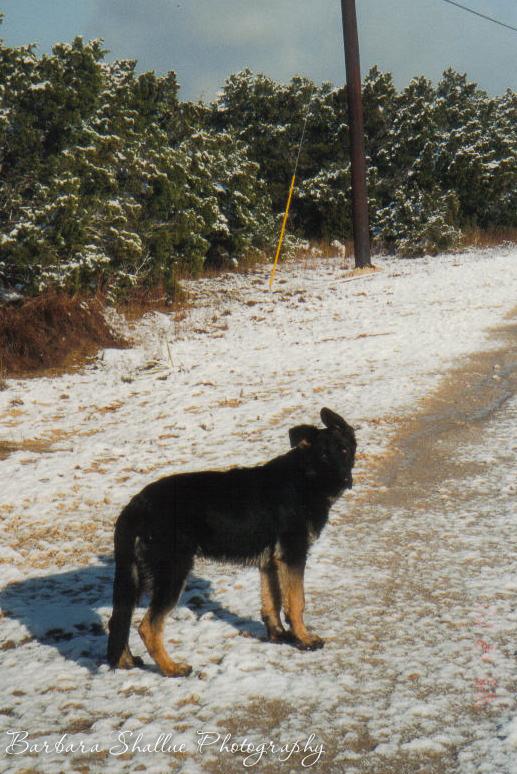 Max snow 2 04