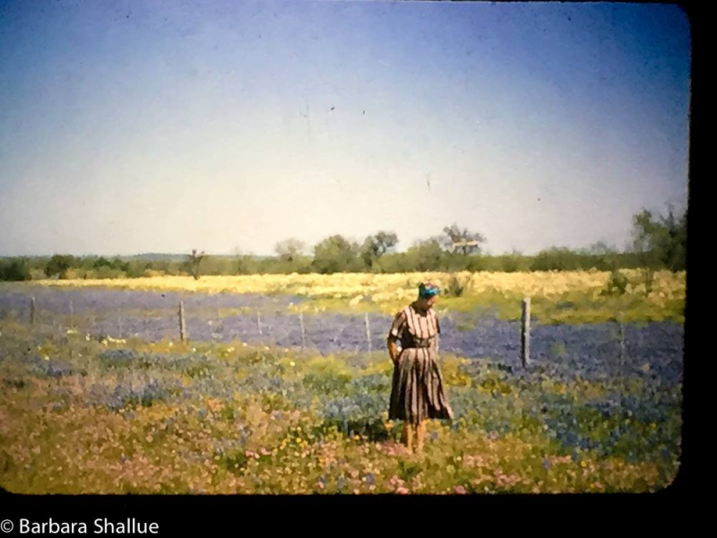 Grandmother and bluebonnets