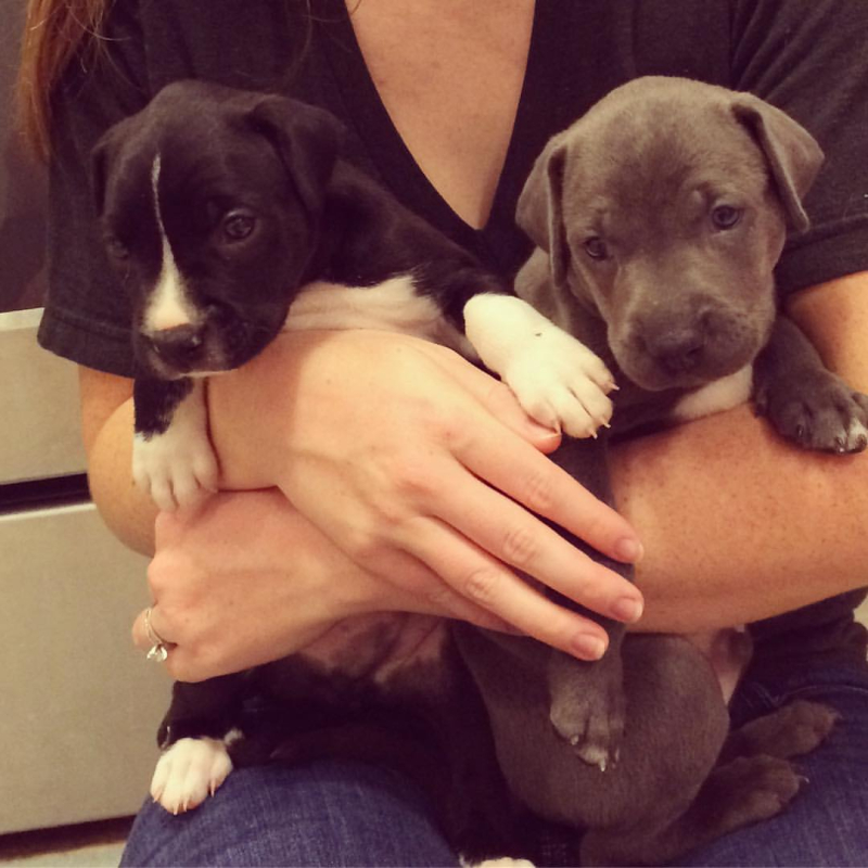 Tommy's puppies