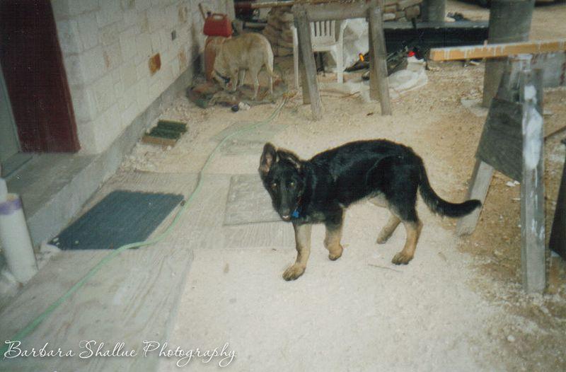 Max puppy 12 03