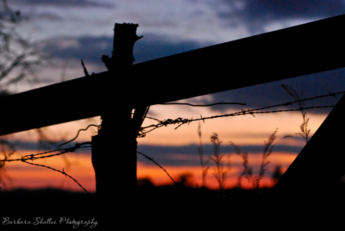 Barbed wire nov 13 2016-0016-2